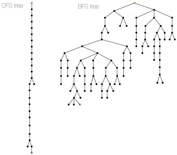 BFS builds a shorter,shaggier tree, while DFS builds a tree that is a path with few branches